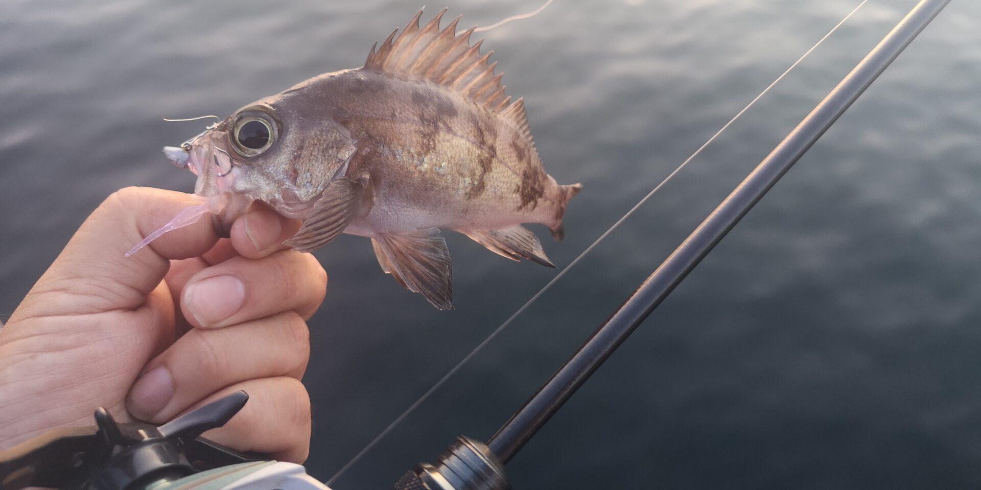 釣りは釣れるから楽しい!