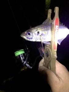 GWの釣行