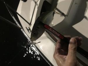 横浜ボートアジング