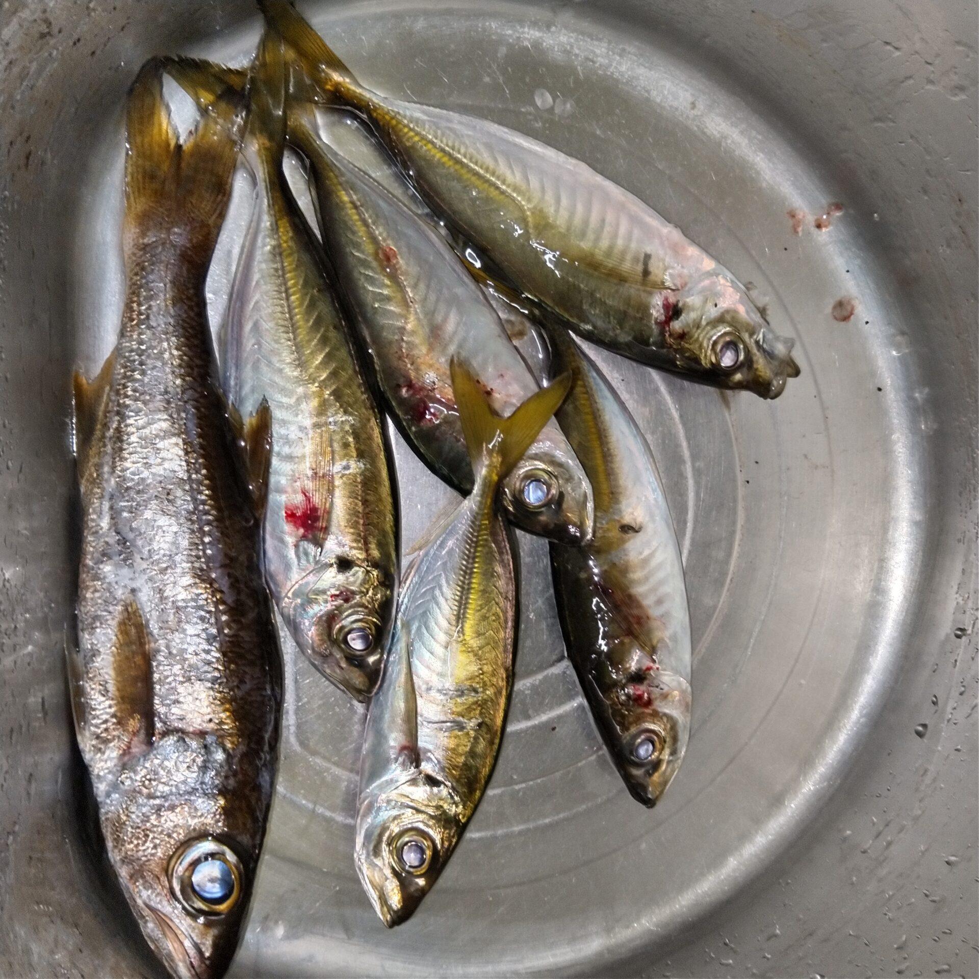 釣り人が多い中