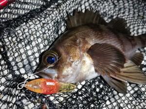 MIMIQ FISH!!