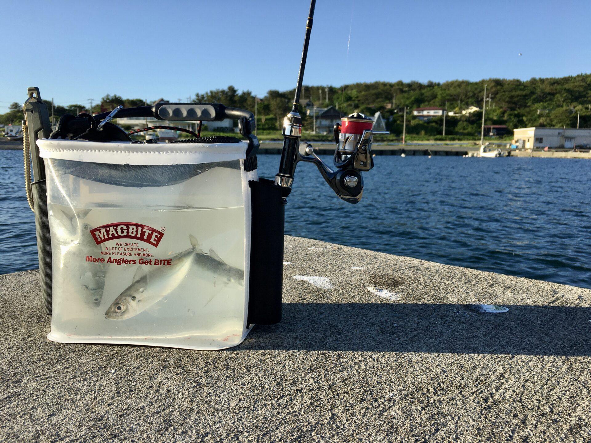 近くの漁港をアジ調査