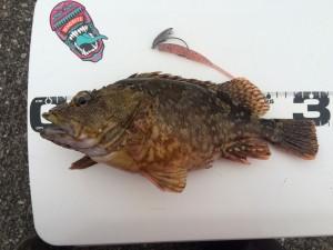 2017年  1匹目の魚