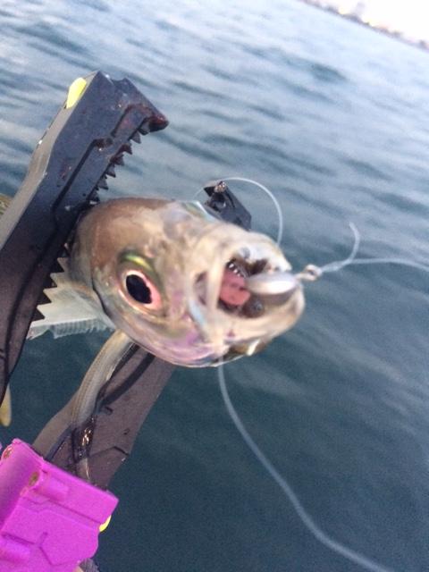 ブーティーシェイクで釣り勝つ