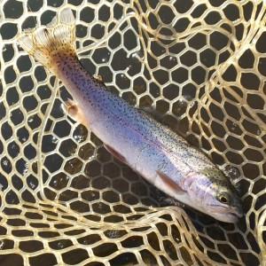 管理釣り場でニジマス釣り