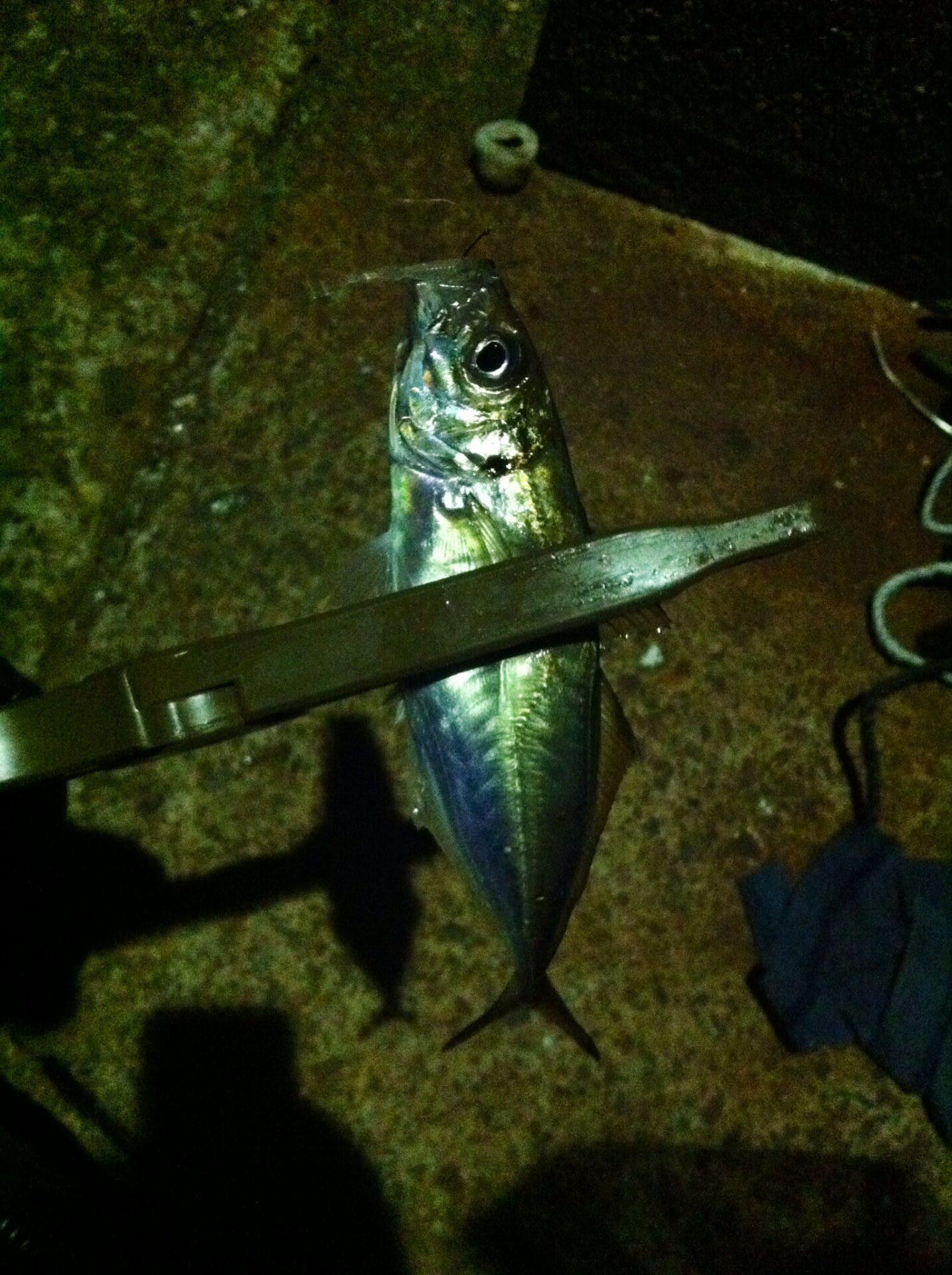 雨後の釣行