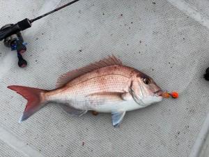 鯛ラバブースト炸裂